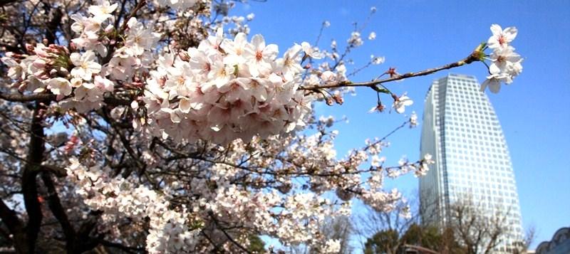 10年4月4日・上京_c0129671_18352854.jpg