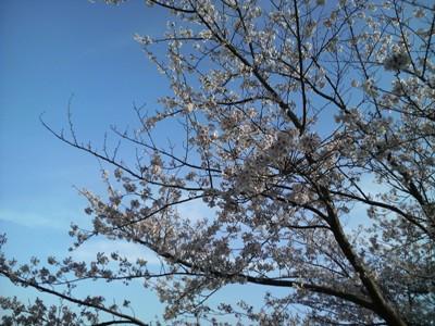 駕与丁公園(かよいちょうこうえん)に初めて行きました。_e0188087_4142891.jpg