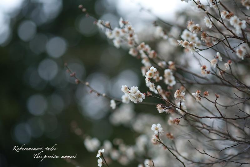 芽吹き始めた山や森_c0137403_118373.jpg