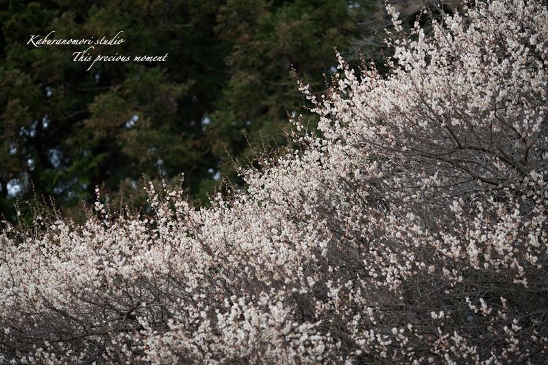 芽吹き始めた山や森_c0137403_118465.jpg