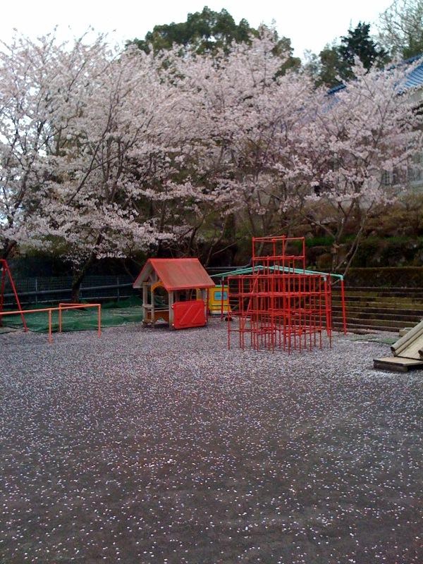 園庭はさくらのじゅうたん 今日の給食 お客犬_b0188106_18361511.jpg