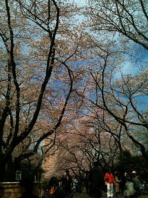 谷中で花見_a0036808_1415756.jpg