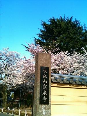 谷中で花見_a0036808_14195428.jpg