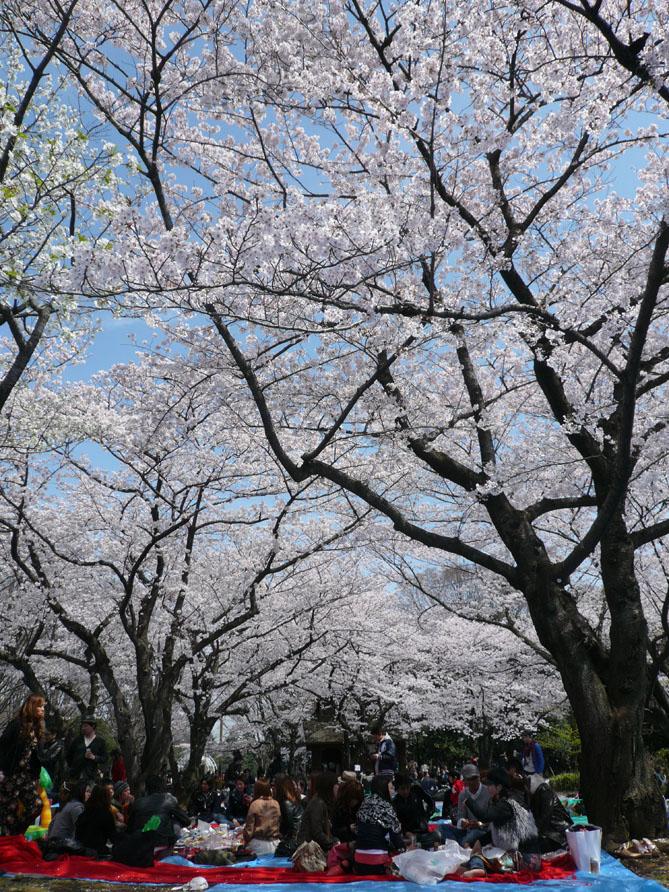 お花見_f0201310_193827.jpg