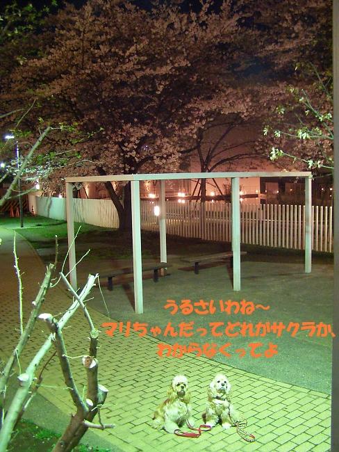 b0067012_20402446.jpg