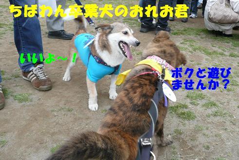 f0121712_16265937.jpg
