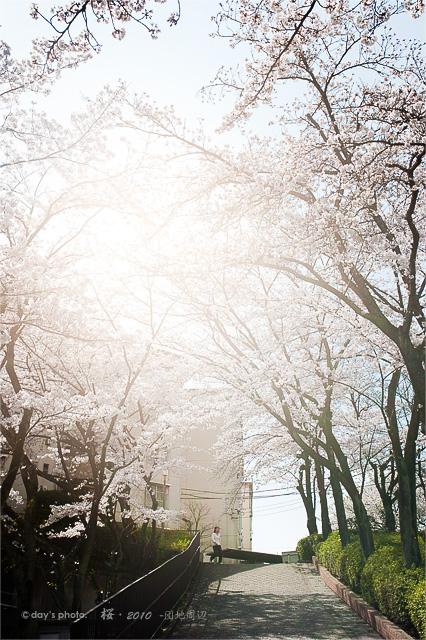 団地桜景 #03_e0117517_208471.jpg