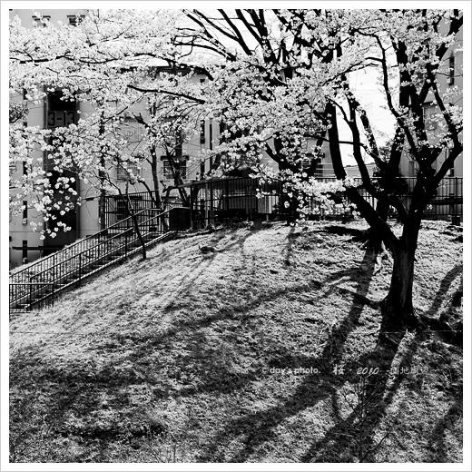 団地桜景 #03_e0117517_209851.jpg