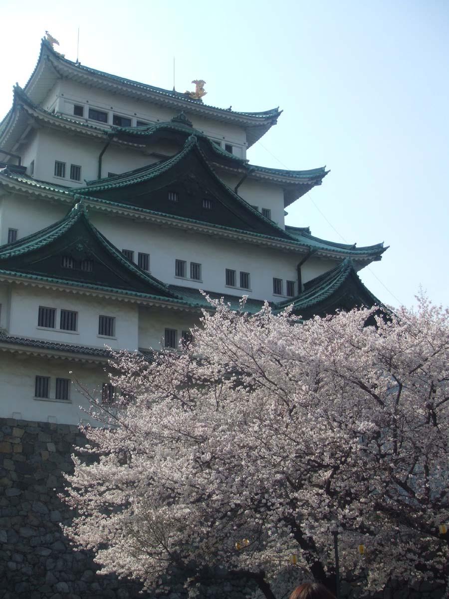 名古屋城へお花見&アレルギー症状で救急病院へ_c0007919_1337289.jpg