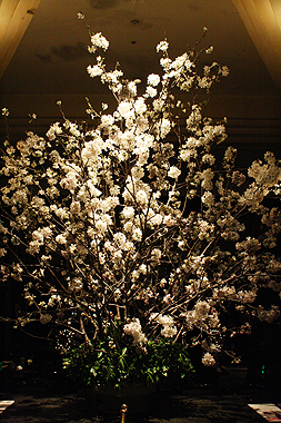 桜_f0170519_23131983.jpg