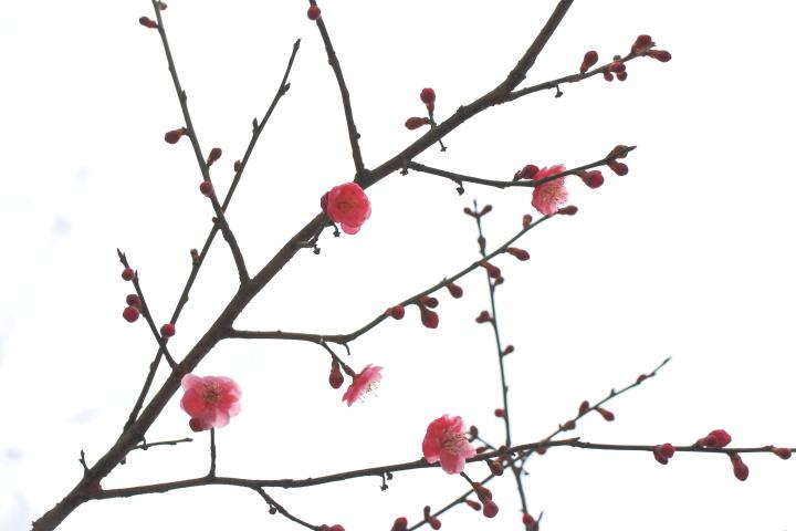 3月29日_e0169421_20453841.jpg