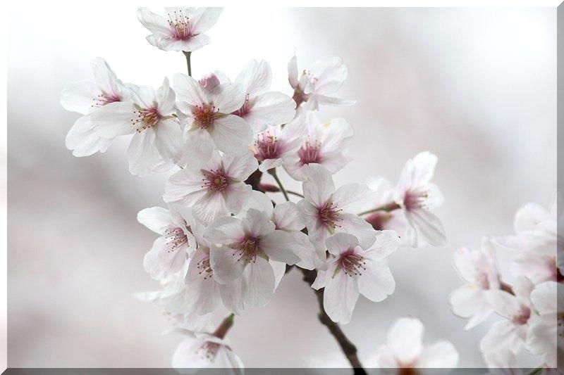 春彩丼Ⅱ <HARU IRODORI DONⅡ>_f0100825_22283037.jpg