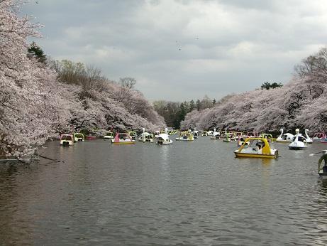 井之頭公園の桜~_c0079828_1758412.jpg