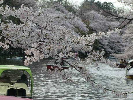井之頭公園の桜~_c0079828_1831753.jpg
