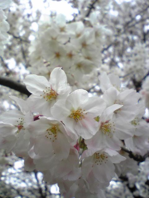 お花見♪_f0099231_2349350.jpg