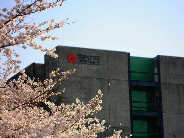 夜桜と太陽の塔!_a0165538_9405610.jpg