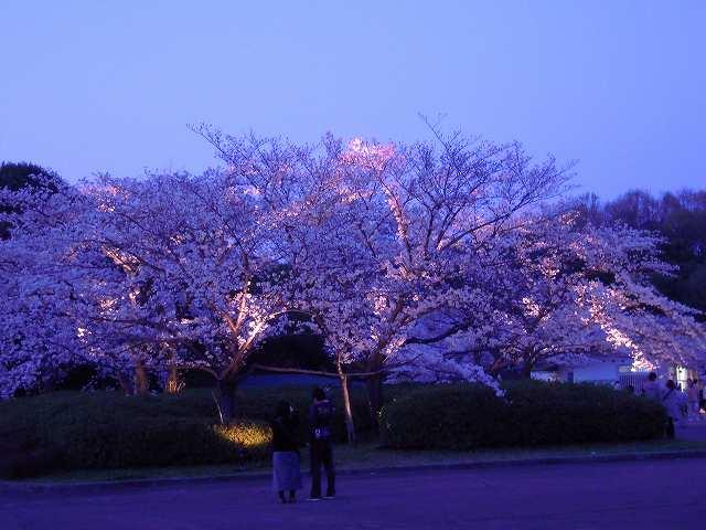 夜桜と太陽の塔!_a0165538_943840.jpg