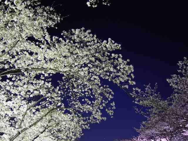 夜桜と太陽の塔!_a0165538_944646.jpg