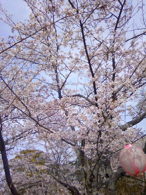 花見。_f0108346_2154347.jpg