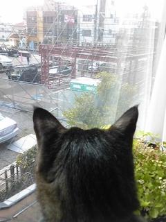 猫ちゃんも新医院に注目してくれてます (^。^)_e0095750_2323624.jpg