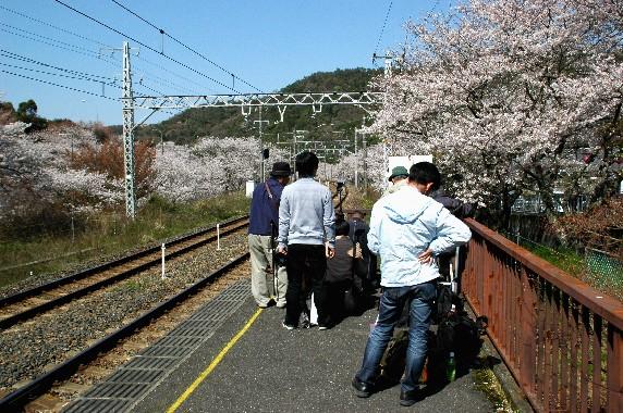 春爛漫_b0093754_094431.jpg