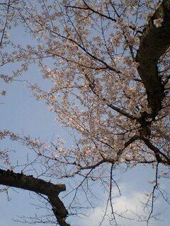 2010.4.4日曜日_f0220354_83027.jpg