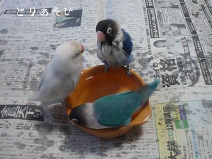 暑いよ〜〜〜_e0147757_20555054.jpg