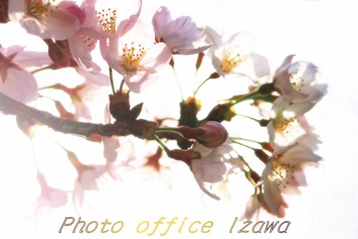 c0181958_0415654.jpg