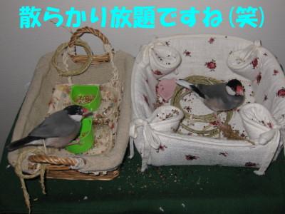 b0158061_20461910.jpg