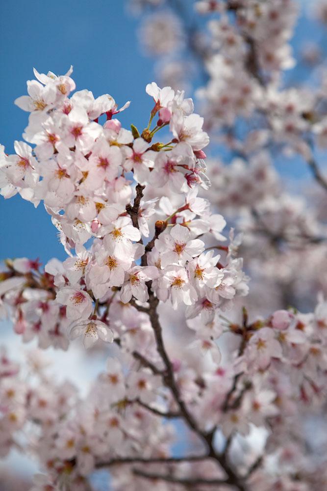 恒例のお花見を楽しみました!_a0163962_1381381.jpg