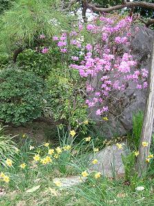 おひとりさまの花見 その二_f0139963_717562.jpg