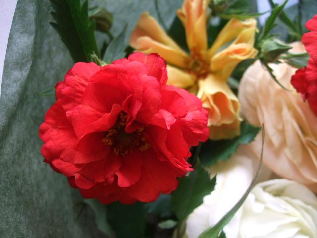 オークリーフ(赤いダイコン草と山吹とラナンキュラスの花束)_f0049672_16374435.jpg