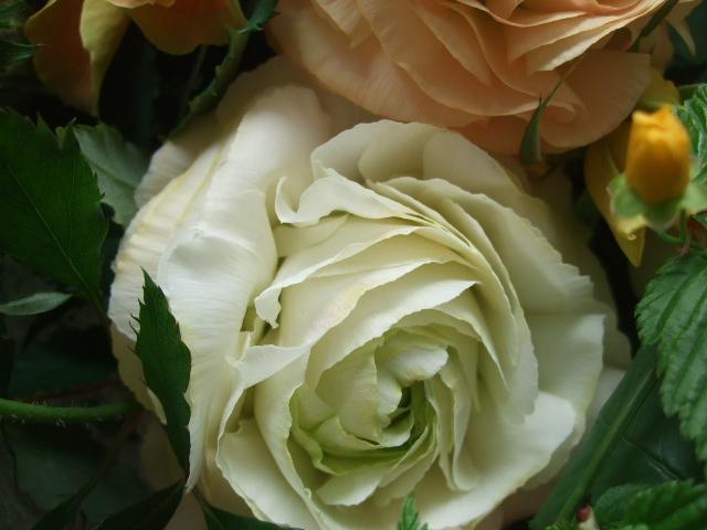 オークリーフ(赤いダイコン草と山吹とラナンキュラスの花束)_f0049672_1638173.jpg