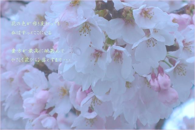 b0154475_2214843.jpg