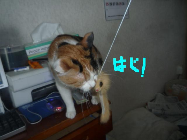 猫じゃらしpart2_b0112380_2010446.jpg