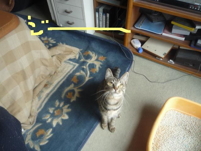 猫じゃらしpart2_b0112380_20121096.jpg