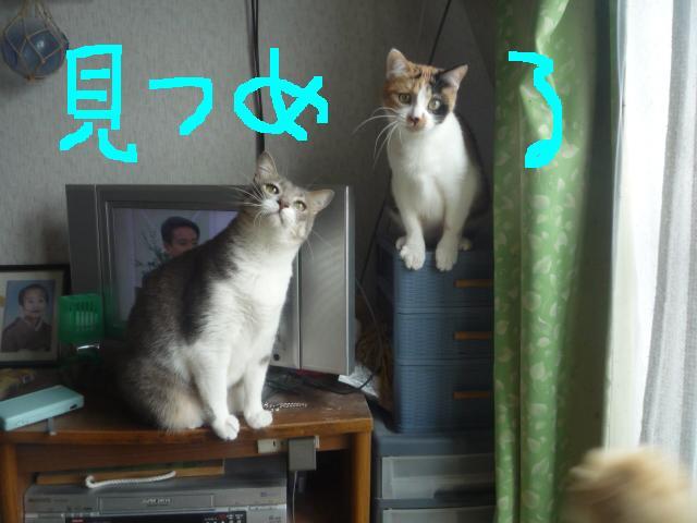 猫じゃらしpart2_b0112380_20131226.jpg