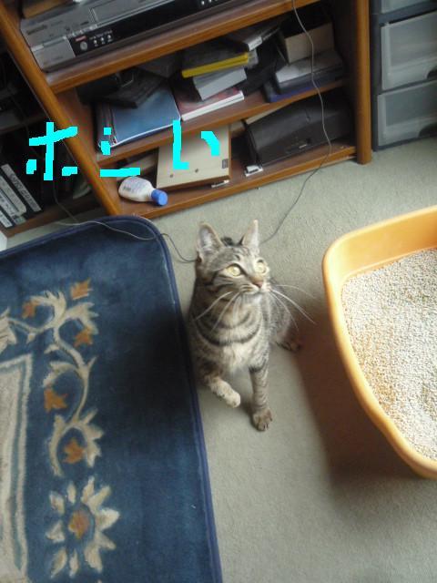 猫じゃらしpart2_b0112380_20135378.jpg