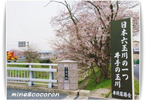桜ださくら~_a0053987_22483368.jpg