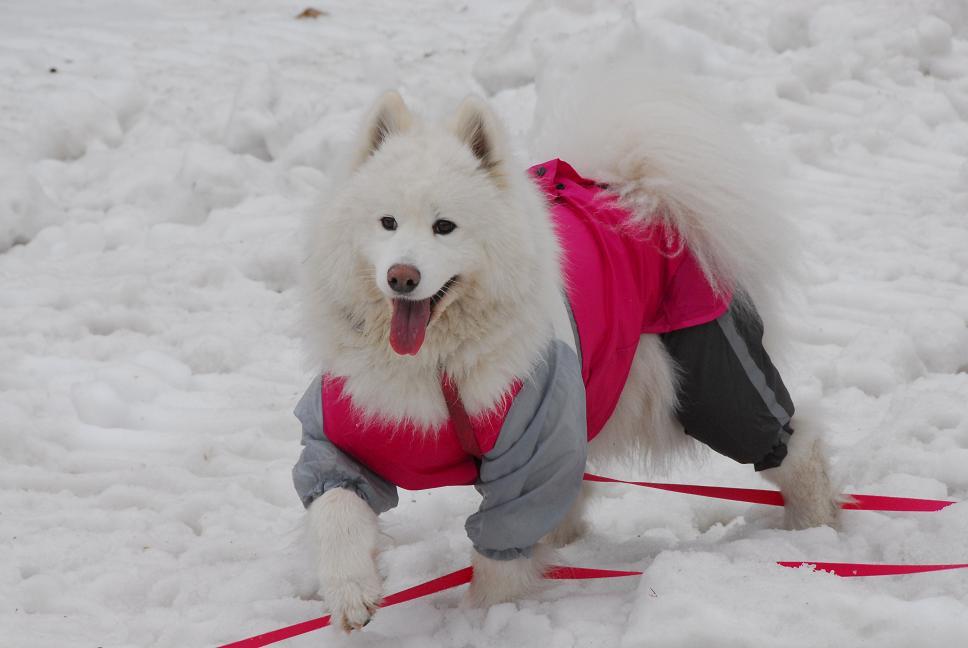 雪&桜~!_a0049296_20564359.jpg