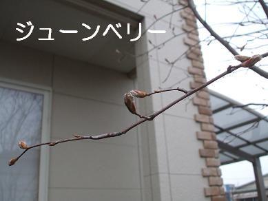 f0179203_1731324.jpg