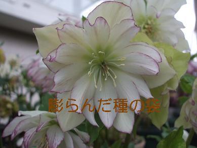 f0179203_1782960.jpg