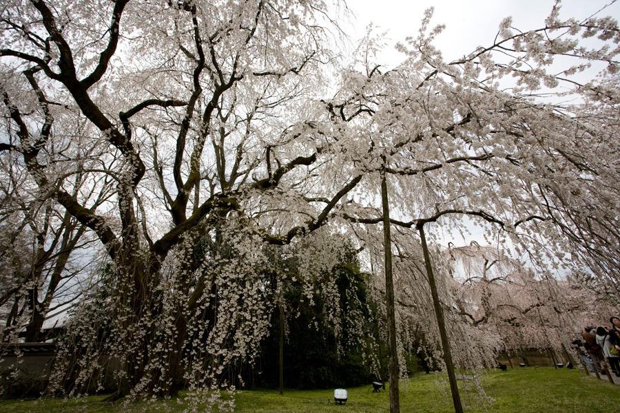 醍醐寺の桜2010 (3) _b0043304_22313338.jpg