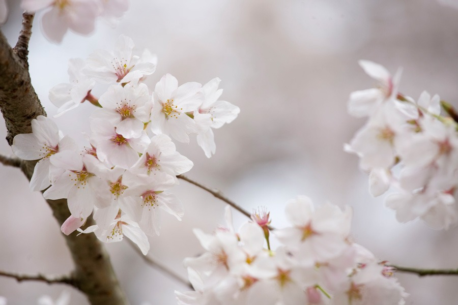 醍醐寺の桜2010 (3) _b0043304_2232292.jpg