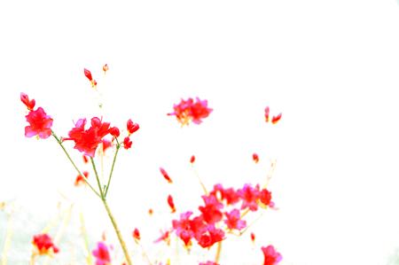b0139407_2011136.jpg