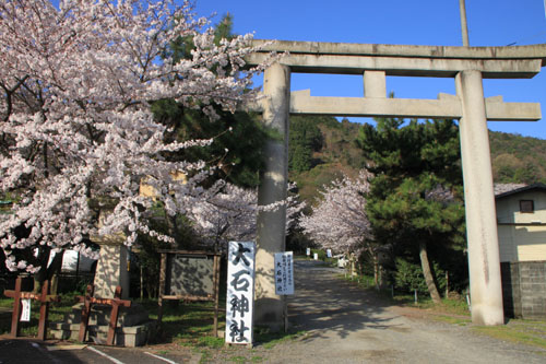 さくら満開 大石神社_e0048413_22001.jpg