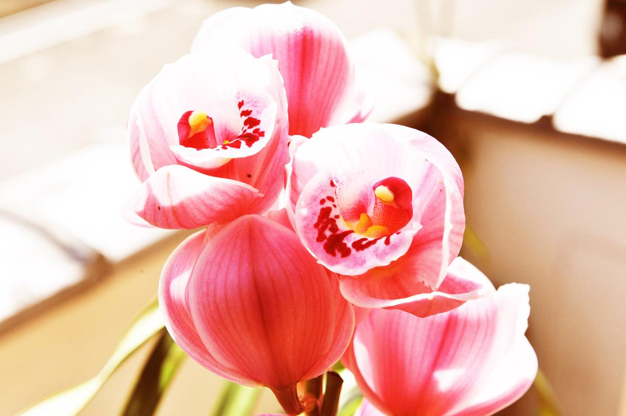 ランの花 壁紙写真_f0172619_10123341.jpg