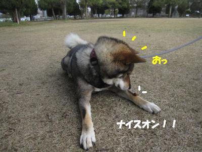 f0143123_19514868.jpg