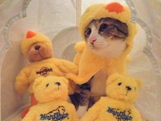 桜王子猫 ぽー編。_a0143140_21433925.jpg