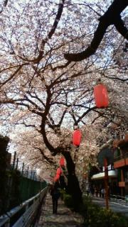 巣鴨の桜も_f0140343_1437687.jpg